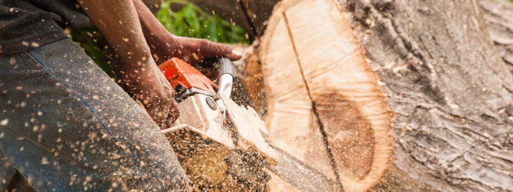Anlægsgartner fælder træ på Lolland og Falster